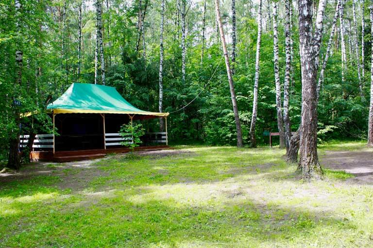 Зеленый шатер в лесу фото